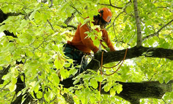 Tree Trimming in Andover MA Tree Trimming Services in Andover MA Tree Trimming Professionals in Andover MA Tree Services in Andover MA Tree Trimming Estimates in Andover MA Tree Trimming Quotes in Andover MA