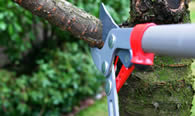 Tree Pruning Services in Andover MA