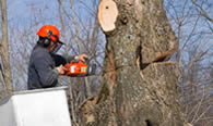 Tree Removal in Andover MA